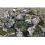 Ландшафтный камень Известняк со мхом (фр. 100-500 мм.)